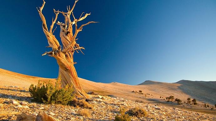 tree-dead-desert-branches-textures-stones-1054196-wallhere.com